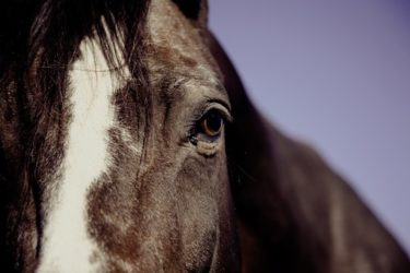 馬の気持ちを理解するための、誰でもわかる簡単な方法とは?