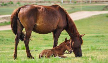 ☆お馬さん大好きな食べ物ランキング☆ 幸せな馬を増やすための方法