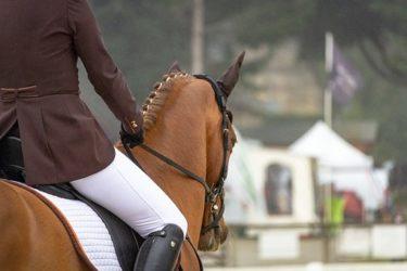 上手な騎手が馬に求める優先事項8選 ~馬術調教の8原則~