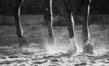 馬は肢(あし)が命である理由 ~予後不良・安楽死の境目~