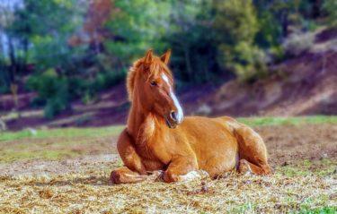 馬も砂風呂に入ります! ~放牧は馬のリラックスタイム~