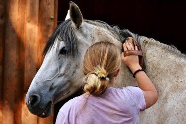 知っておくと便利⭐馬の手入れ道具15選 ~用途や使用方法を解説~