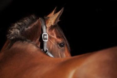 【おすすめ】乗馬の悩みや騎乗方法・馬の知識や疑問を20項目一気に解決 ~『馬uma サポート』質問トク集①~
