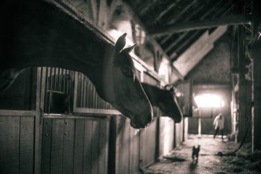 馬のお部屋の秘密をこっそり教えます ~馬のお部屋は馬房・厩舎・馬小屋と呼び方がたくさん~
