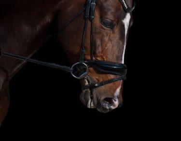 乗馬で必要な道具とは 基本馬具一覧 ~機能・参考価格・初心者の方から全ライダー必見~