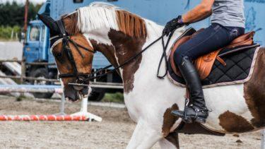 乗馬のハミ受けが簡単に感じる方法とは!? 3分で分かる手綱の使い方