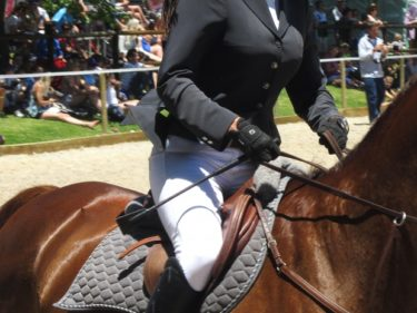 無料で誰でも出来る!乗馬で拳の安定する練習法公開! ~道具コスト0円で拳が安定~