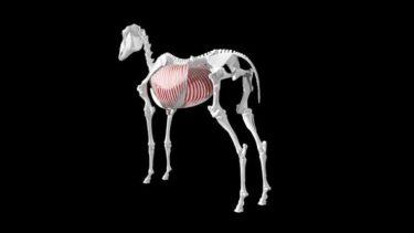 背中に乗れる動物の特徴とは ~草食動物が多い理由~
