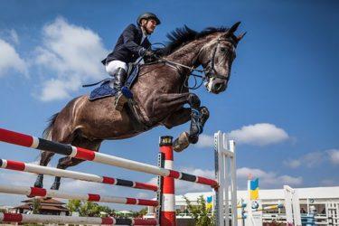 乗馬で障害飛越の基礎を学ぶ①!!初心者~中級者必見コンテンツ