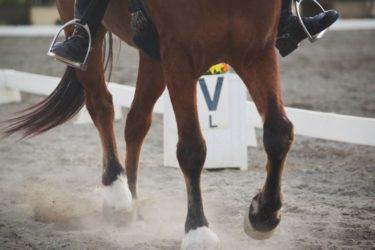 肩を内へ(肩内)の見やすい・分かりやすいやり方 ~2蹄跡運動を理解しよう~