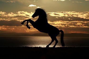 馬が立ち上がる際のとっさの対処法と解決方法とは