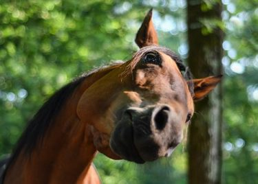 馬の知識に差がつくおすすめの記事特集 ~乗馬・競馬・オリンピックを楽しむ~