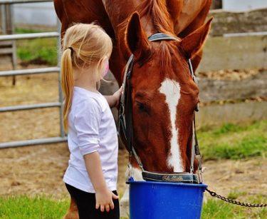 馬に上手く乗りたいなら普段から左手を使え!