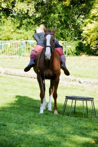 乗馬・競馬をもっと楽しむための知識と方法を伝授! ~『馬uma サポート』質問トク集③~