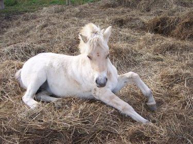 意外と知らない馬の病気・怪我とその治療法とは!? ~馬だって怪我や病気は辛いんです~