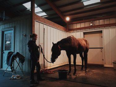 厩務員になるには?馬に関わる仕事について仕事内容・必要な資格・年収を公開!