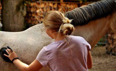 乗馬の手入れのやり方とは? ~馬の健康増進・信頼関係を築く最良の方法~
