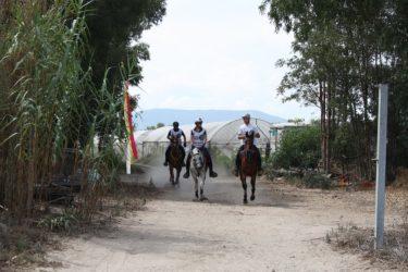 乗馬の新時代競技、エンデュランス馬術競技とは? ~オリンピック種目ではないが馬術のW杯世界選手権種目~