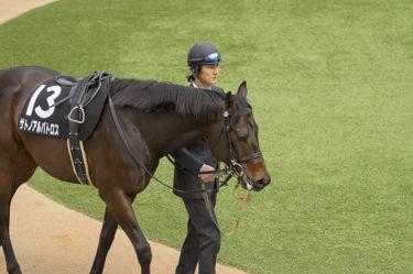 馬の跛行(ハコウ)の種類・原因・見分け方を解説 ~馬の健康状態を知る~