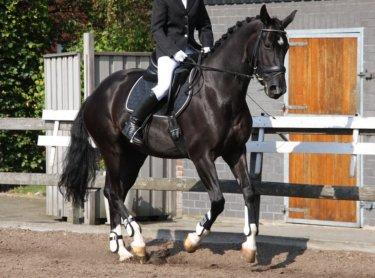 馬が勝手に動いている様に見える誘導のやり方・練習方法とは ~効果的な誘導を手に入れる②~