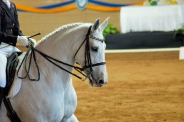 横運動(側方運動)が馬に与える効果と分かりやすいやり方とは!? ~8つのメリット・種類・騎乗しない練習方法~