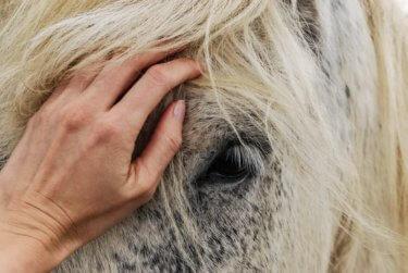 乗馬に向いている人または馬乗りに必要なマインドとは ~忍耐と怒りの抑制~