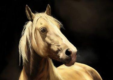 馬の気持ちを理解する騎乗時の方法とは? ~危機管理と馬の7つのサイン~