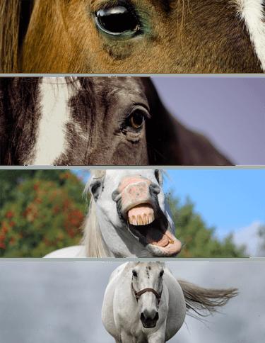 乗馬での正しいコンタクトのとり方とは ~常歩・速歩・駈歩に分けて解説~