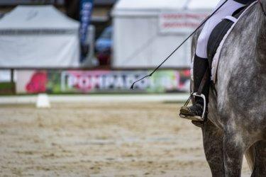 馬を停止させる・止めるための7つの基本の考え方とは!? ~全肢そろえたキレイな停止を目指す~