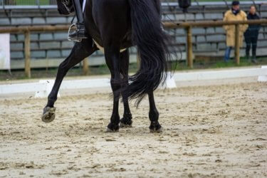 シンプルチェンジのやり方と最速習得のコツとは!? ~乗馬での移行の大切さ~