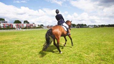 乗馬におけるシートを改善するための10個ポイントとは!? ~正しい姿勢のメリットから考える~