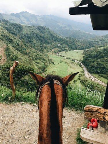 乗馬で外乗(トレイル)をする馬と人に与えるメリットとは!? ~乗馬を始めた人の目標人気No.1~