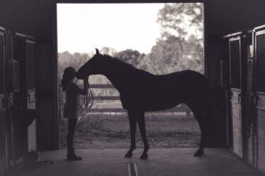 馬房から馬を出す・入れるときの注意点とは? ~怖い・不安を取り除こう!~